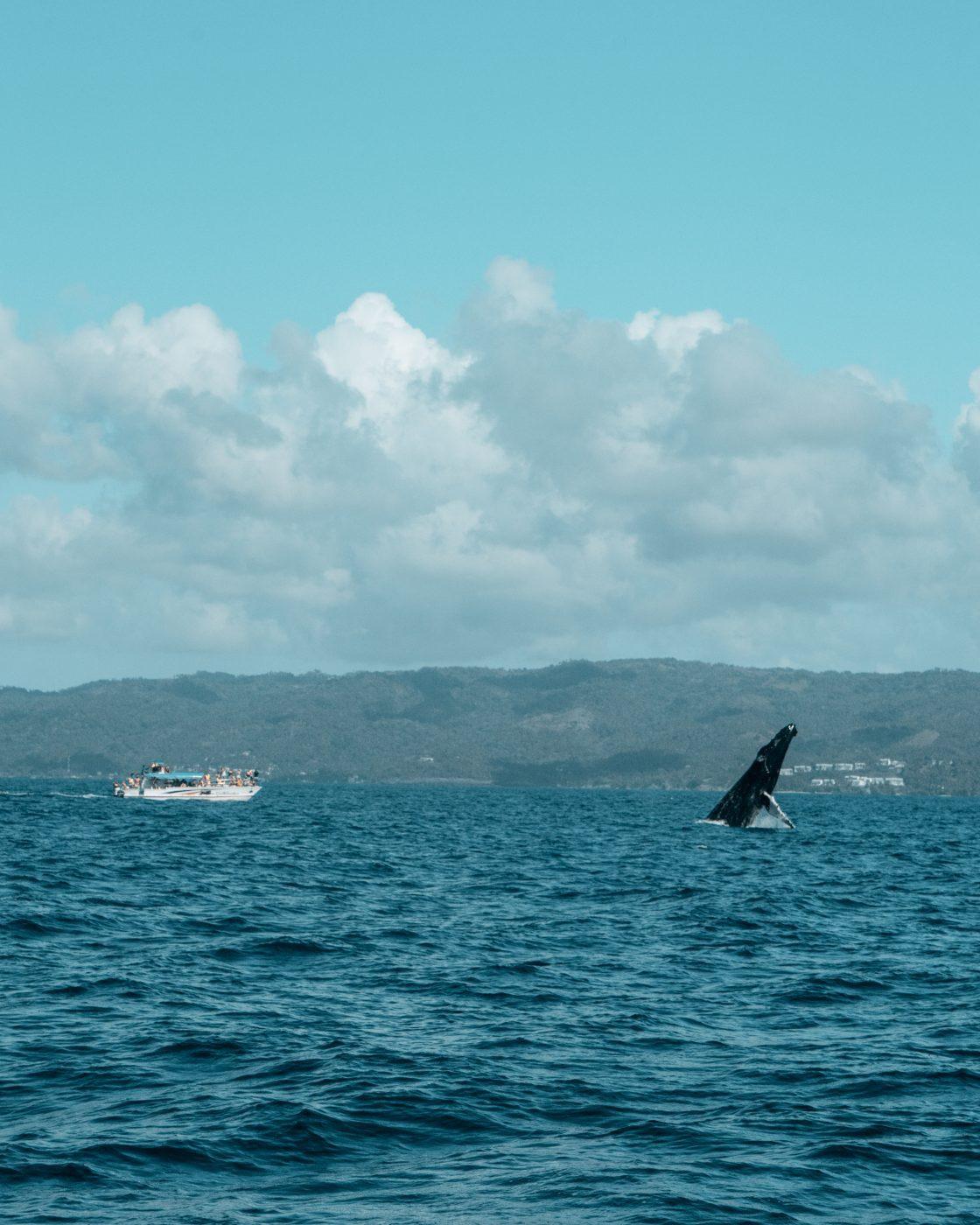 whale watching safari in Samana bay, Dominican Republic